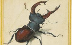 Dürer's Stag Beetle (1505)